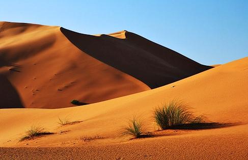 Deutschland als Wüste für Start-ups